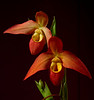 Flowers : 2 galleries with 181 photos